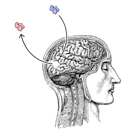 brainchange