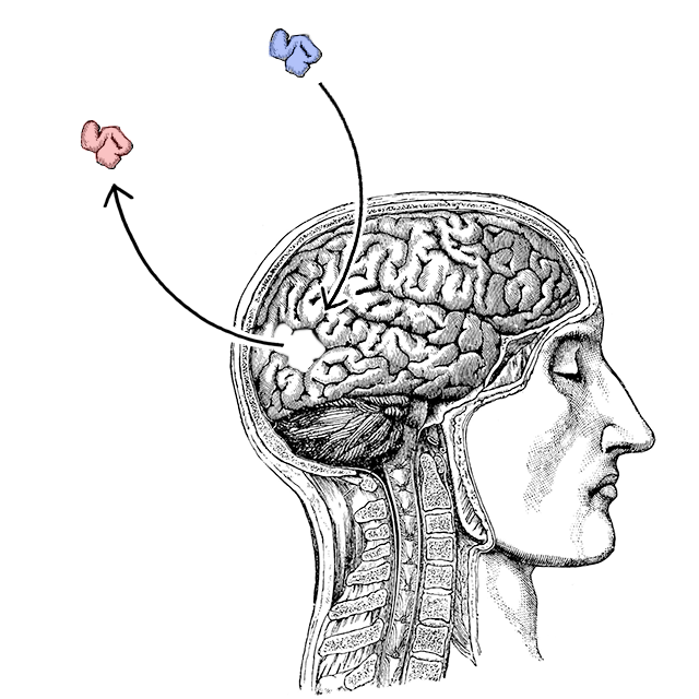 yanss 093 the neuroscience of changing your mind you are not so
